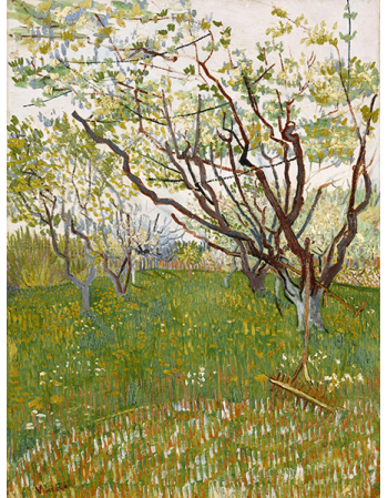 Reprodukcje obrazów Vincent van Gogh Flowering Orchards