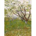 Reprodukcje obrazów Flowering Orchards - Vincent van Gogh