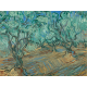 Reprodukcje obrazów Vincent van Gogh Olive Grove