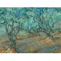 Reprodukcje obrazów Olive Grove - Vincent van Gogh