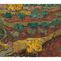 Reprodukcje obrazów Olive Trees on a Hillside - Vincent van Gogh