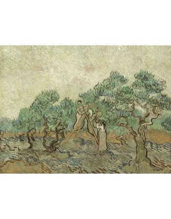 Reprodukcje obrazów Vincent van Gogh The Olive Orchard