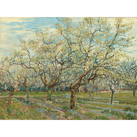 Reprodukcje obrazów Vincent van Gogh The White Orchard