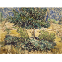 Reprodukcje obrazów Tree and Bushes in the Garden of the Asylum - Vincent van Gogh