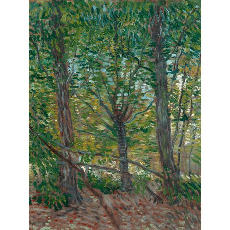 Reprodukcje obrazów Vincent van Gogh Trees