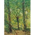 Reprodukcje obrazów Tress and Undergrowth - Vincent van Gogh