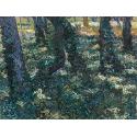 Reprodukcje obrazów Undergrowth - Vincent van Gogh