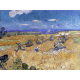 Reprodukcje obrazów Vincent van Gogh Wheat Fields with Reaper, Auvers