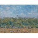 Reprodukcje obrazów Wheatfield with Partridge - Vincent van Gogh