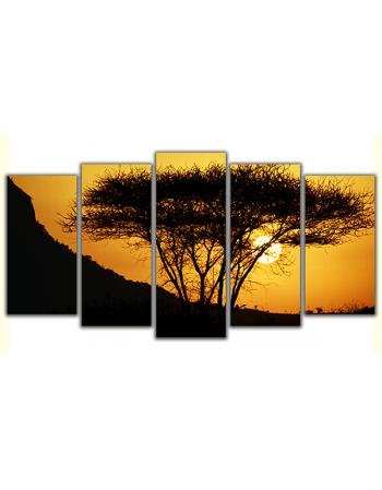 Afrykańskie drzewo