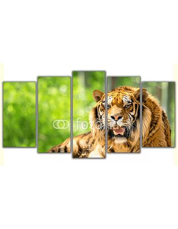 Obraz na płótnie poliptyk Leżący tygrys