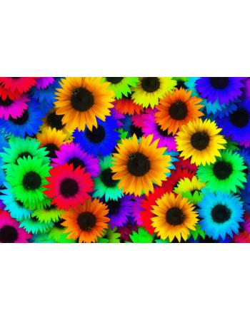 Obraz-na-płótnie-Kolorowe słoneczniki