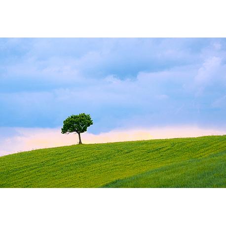 Obraz na płótnie Samotne drzewo