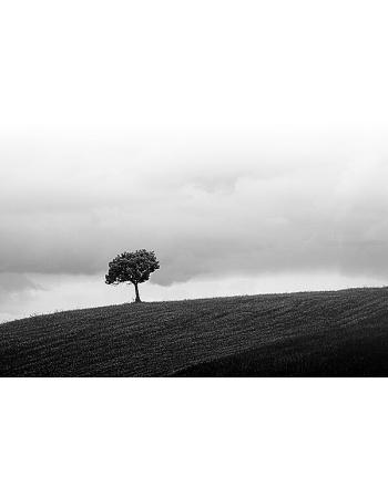Obraz na płótnie Samotne drzewo - Czarno - białe