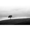 Samotne drzewo - Czarno - białe