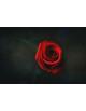 Obraz na płótnie Czerwona róża