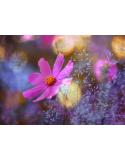 Fioletowy kwiat