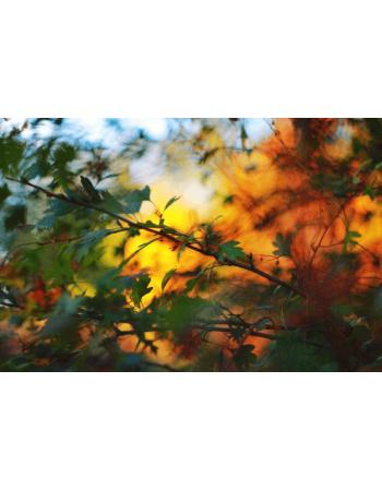 Obraz na płótnie Jesienne barwy