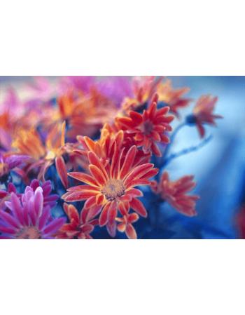 Obraz na płótnie Jesienne kwiaty