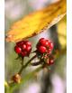 Obraz na płótnie Jesiennie