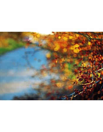 Obraz na płótnie Jesień w parku