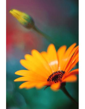 Obraz na płótnie Kolorowa wiosna