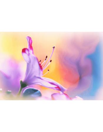 Obraz na płótnie Kwiat malowany kolorami