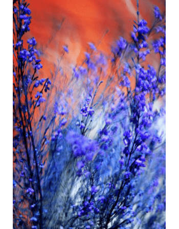 Obraz na płótnie Kwiaty jak malowane