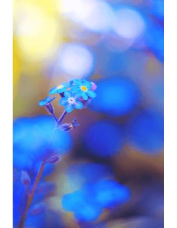 Obraz na płótnie Niebieski Kwiat