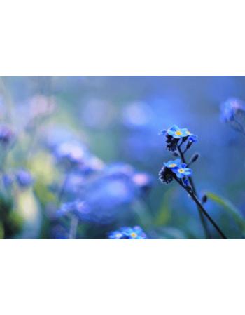 Obraz na płótnie Niebieskie kwiaty