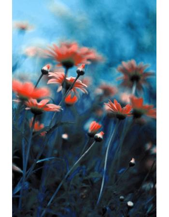 Obraz na płótnie Piękne kwiaty