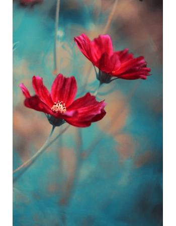 Obraz na płótnie Piękny kwiat