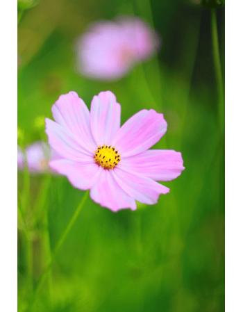 Obraz na płótnie Różowy kwiat