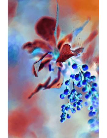 Obraz na płótnie Wyjątkowy kwiat
