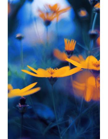 Obraz na płótnie Żółte kwiaty