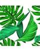 Obraz na płótnie - Liść - Jungle - Fedkolor