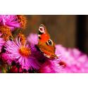 Kwiat z kolorowym motylem