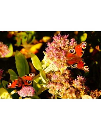 Piękne motyle na kwiatkach