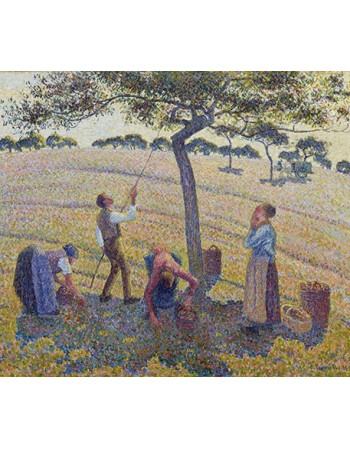 Reprodukcje obrazów Apple Harvest - Camille Pissarro