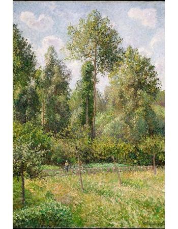 Reprodukcje obrazów Poplars, Éragny - Camille Pissarro