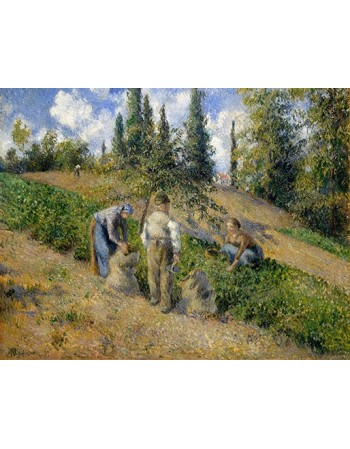 The Harvest, Pontoise