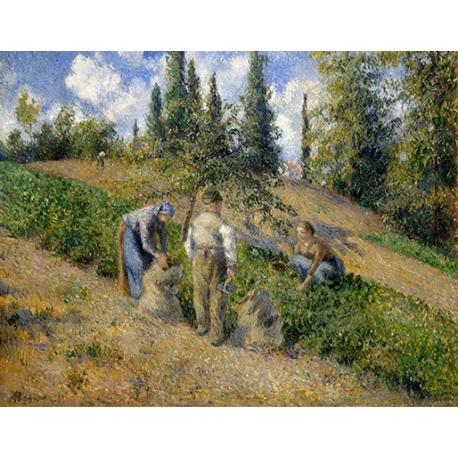 The Harvest, Pontoise