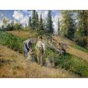 Reprodukcje obrazów The Harvest, Pontoise - Camille Pissarro