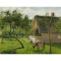 Reprodukcje obrazów Verger à Varengeville avec vache - Camille Pissarro