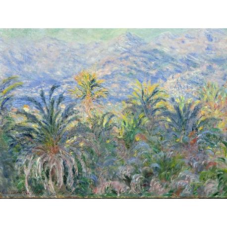 Palm Trees at Bordighera