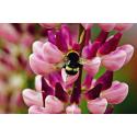 Kwiat z owadem