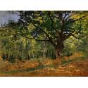 Reprodukcje obrazów The Bodmer Oak, Fontainebleau Forest - Claude Monet