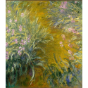 Reprodukcje obrazów The Path through the Irises - Claude Monet