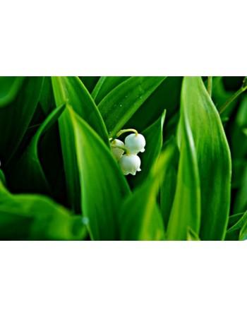 Rozkwitający kwiat